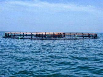 برداشت ۲۰ تن ماهی از قفس دریایی
