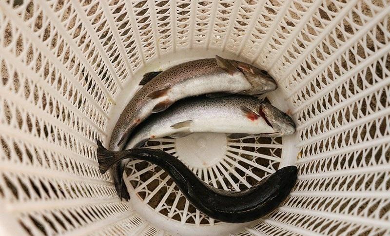 ۱۰۰ میلیون انواع ماهیان بومی سالانه در دریای خزر رهاسازی میشود