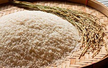 رشت ، بزرگترین تولید کننده برنج کشور