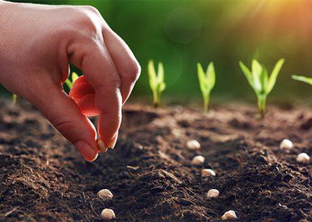 پیشگیری از ورود و خروج آفت های محصولات کشاورزی