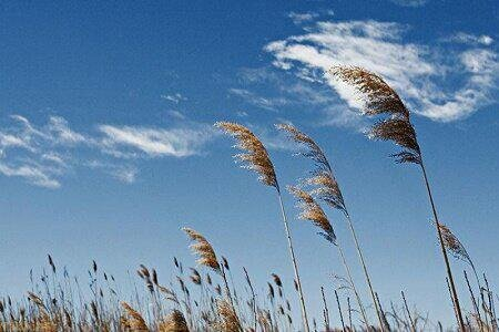 وزش باد گرم به ویژه در کوهستان های گیلان