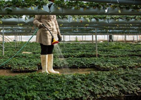 هفت تولید کننده برتر ملی بخش کشاورزی گیلان تجلیل شدند