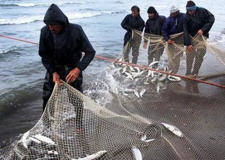 صید بیش از هزار تن ماهی