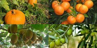 تولید ۱۰ محصول کشاورزی گواهی شده
