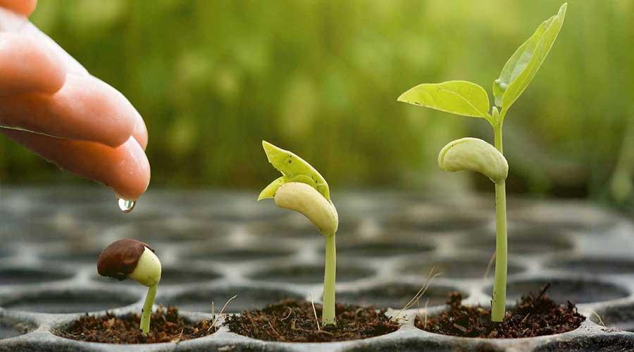 انتخاب بذرهای سالم برای سال زراعی پربار