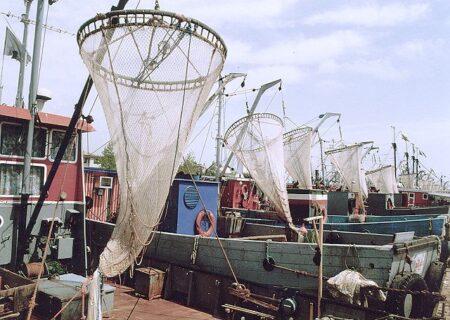 ممنوعیت صید کیلکا از خزر