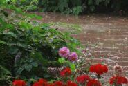 آخرهفته بارانی در گیلان
