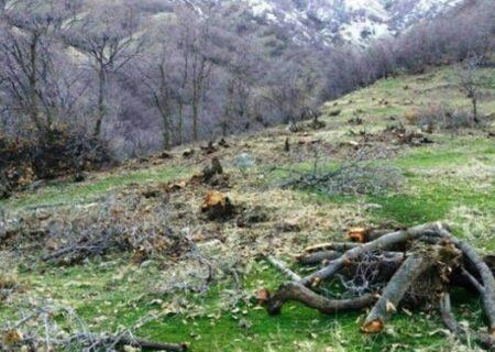 ارائه خدمات زیربنایی در جنگل ها ، ممنوع