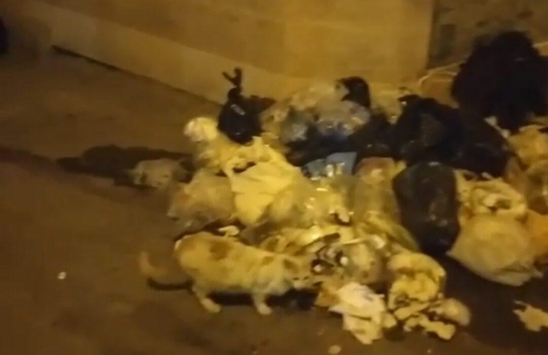 مشکلات یکی از شهروندان منطقه حمیدیان رشت در خصوص عدم رسیدگی برای جمع آوری زباله و تجمع آلودگی ها