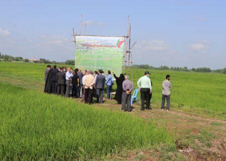 بهرهبرداری همزمان ۱۱۹ طرح عمرانی و تولیدی جهاد کشاورزی گیلان