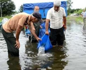 آغاز رهاسازی بچه ماهیان سوف از امروز در رودخانهها و تالابهای گیلان
