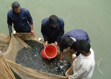 احیای ذخایر آبزیان دریای خزر با رهاسازی بچه ماهیان