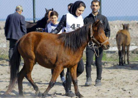 برگزاری مجمع بین المللی اسب کاسپین در گیلان در سال آینده